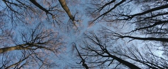 Kritik Zu Das Geheime Leben Der Baume Epd Film